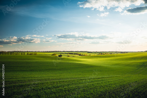 Wall mural Splendid aerial photography of green wavy field in sunny day. Top view drone shot.