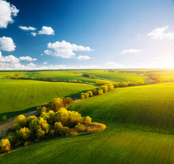 Wall Mural - Fantastic aerial photography of green wavy field in sunny day. Top view drone shot.