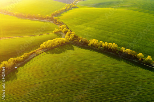 Wall mural Fantastic aerial photography of green wavy field in sunny day. Top view drone shot.