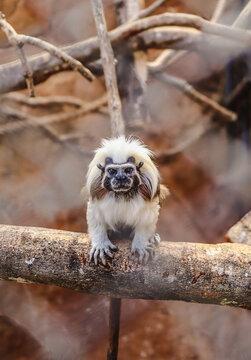 Portrait Of Monkey On Branch