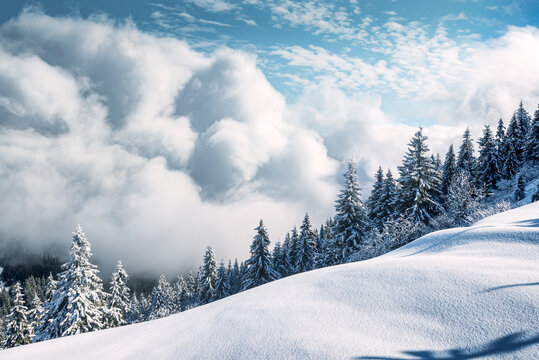 Fantastic winter landscape with snowy trees and incredible cloudscape. Carpathian mountains, Ukraine, Europe. Christmas holiday concept