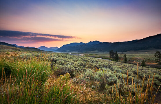 Yellowstone's Lamar Valley just before sunrise on a Summer morning