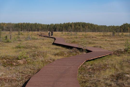 Wooden walkway on the territory of Sestroretsk swamp reserve. Saint-Petersburg. Russia