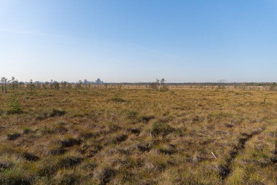 Territory of Sestroretsk swamp reserve. Saint-Petersburg. Russia