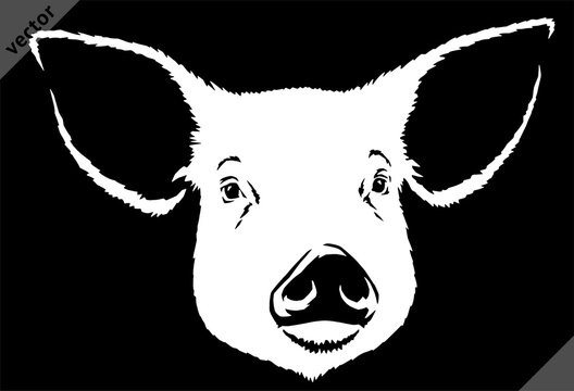 black and white linear paint draw pig vector illustration art