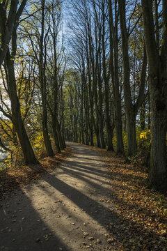 little road at fall season