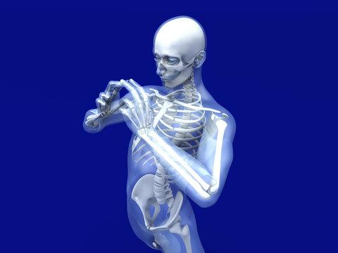 Male Human anatomy visualisation
