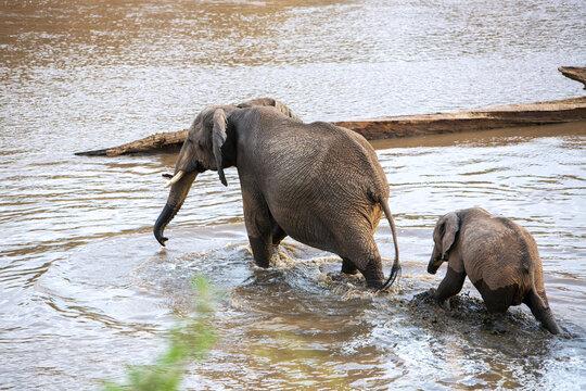 Elephants in water, Kenya