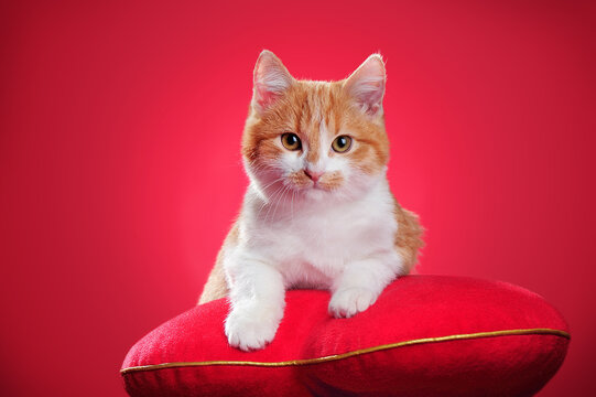 Ginger kitten laying o nthe red pillow against red background