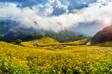 Wall Mural - Tung Bua Tong or Mexican sunflower field at Mae Hong Son Province in Thailand.