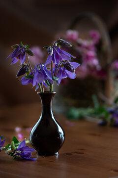Purple aquilegia flowers in small vase. Still life
