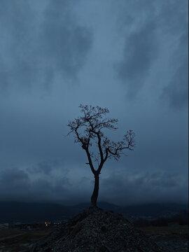 Bare Tree On Landscape Against Sky At Dusk