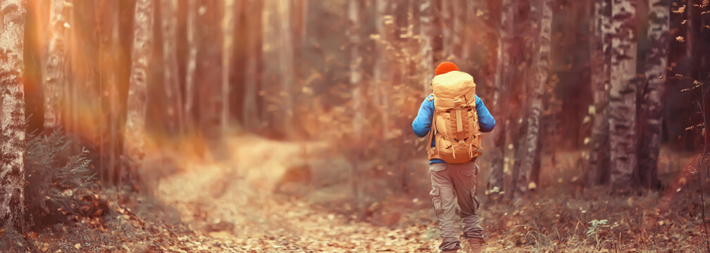 autumn camping in the forest, a male traveler is walking through the forest, yellow leaves landscape in October.