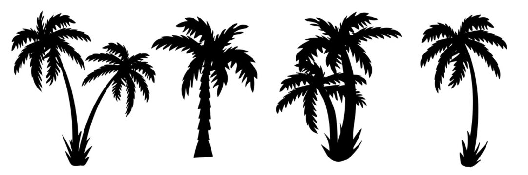 palm tree Silhouettes of palm trees. vector