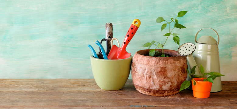 young plants and gardening utensils, springtime gardening, good copy space