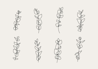 Fototapeta Minimalist botanical branch with leaves elements for abstract collage
