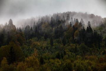Jesienny las we mgle, Bieszczady, Polska