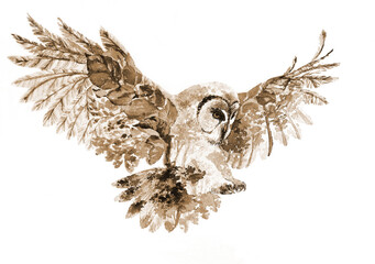 Owl, forest, watercolour illustration, brown sepia on white background