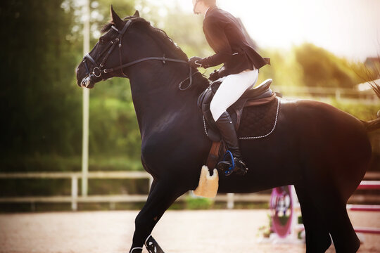 A black fast horse with a rider in the saddle gallops briskly at equestrian sports competitions on a Sunny summer day. Horseback riding. Equestrian sport.