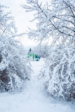 Playground Slide Surrounded by Trees Covered with Snow