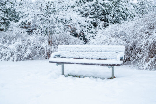 A Wintry Scene in a Park with  Wooden Bench, Trees and Bushes all Covered with Fresh White Snow