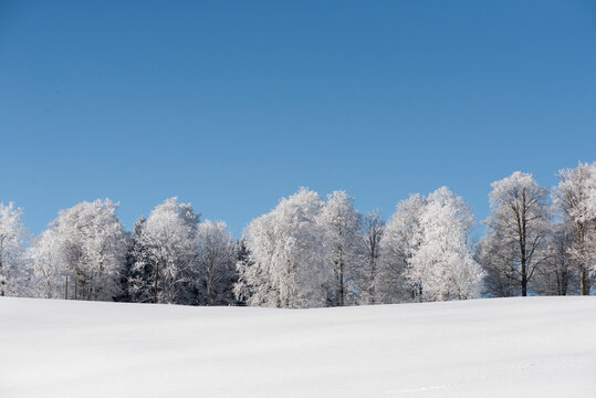 Trees On Snow Covered Field Against Clear Blue Sky