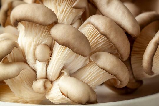 Organic oyster mushrooms. Vegetarian ingredient food. Natural mushroom background