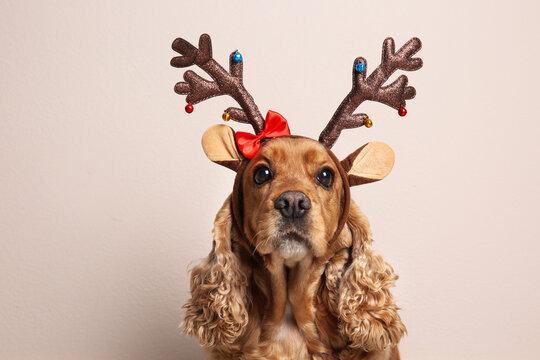 Adorable Cocker Spaniel dog in reindeer headband on light background