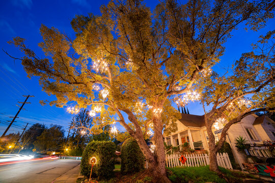 Night view of the beautiful Chandelier Tree