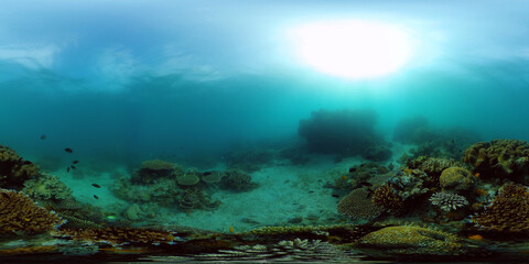 Tropical fishes and coral reef at diving. Beautiful underwater world with corals and fish. Philippines. 360 panorama VR