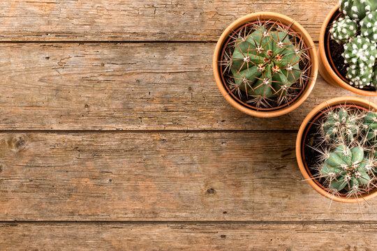 Three potted cactus plants on wooden background, top view with copy space