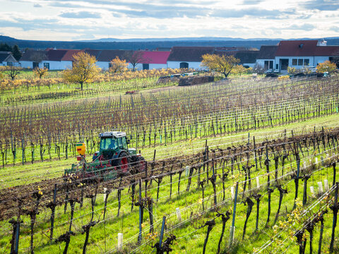 tractor working at a vineyard in autumnn in burgenland