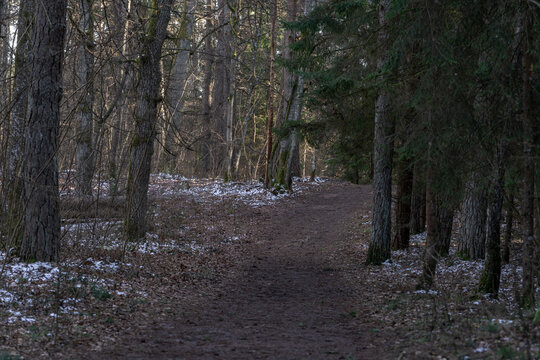Mysterious path full of old autumn leaves in the middle of wooden coniferous forrest, surrounded by pine trees bushes and leaves. Forest in Winter Empty Path. No People