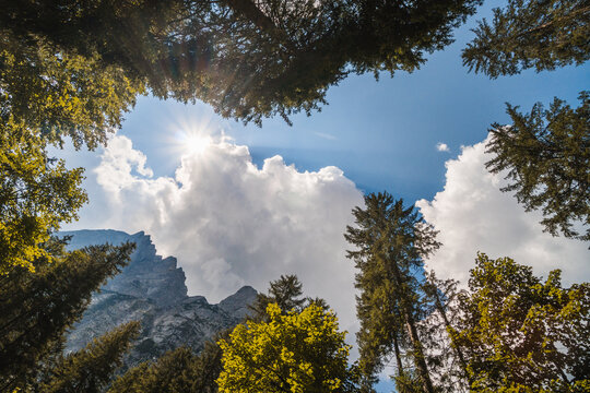 Looking up in the middle of a forest, view of beautiful trees and a blue sky with white clouds and sun rays