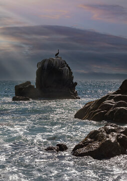 Pelican Resing on rock in the Sea of Cortez