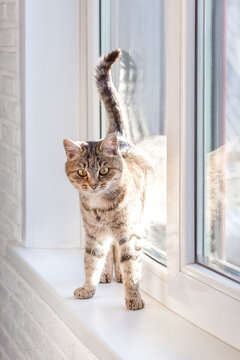 Cute gray tabby cat is standing (sitting) on the window. Look at me.