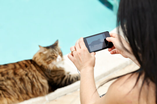 High Angle View Of Woman Photographing Cat With Smart Phone