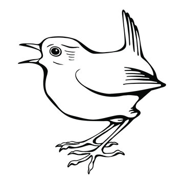 Hand drawn black and white vector of wren bird isolated on white. Festive elements for your design.