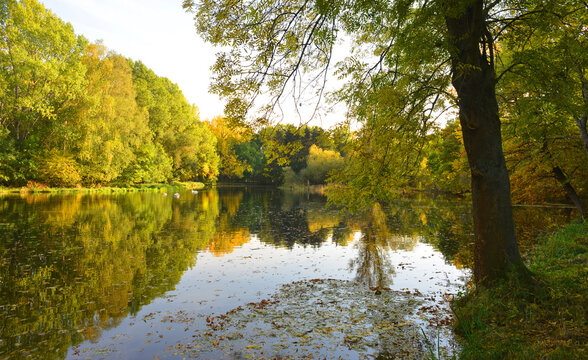 Nature in fall season with colorful trees and swans on a lake