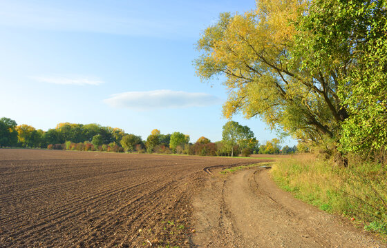 Field and nature in fall with beautiful colored trees