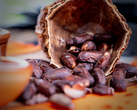 Raw ( cocoa ) chocolate beans at an artisan food market.