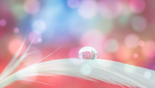 Bird feather on bokeh background with water drop