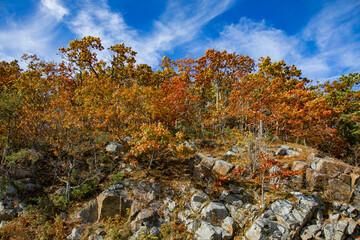 Shenandoah National Park Fall Foliage Wall mural