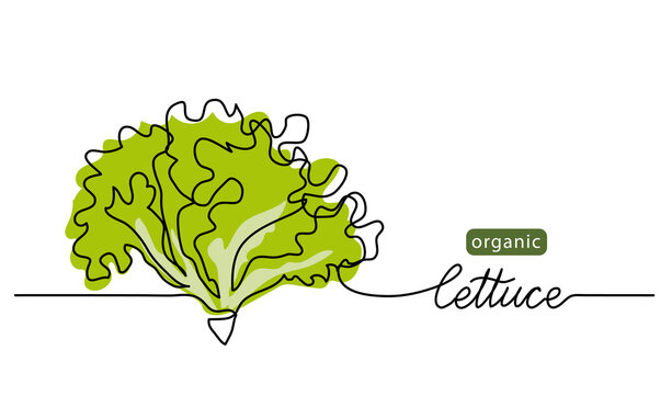 Lettuce, green leaves, bunch of salad vector illustration, background. One line drawing art illustration with lettering organic lettuce.