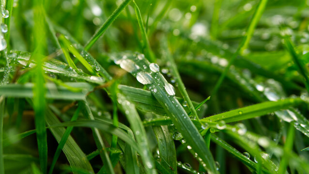Green grass with water droplets after rain