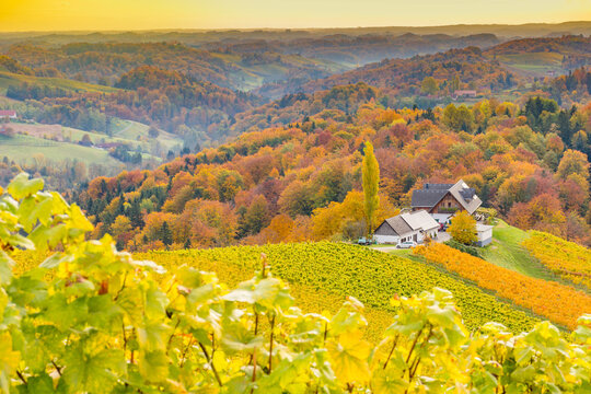 Autumn landscape with South Styria vineyards,known as Austrian Tuscany,a charming region on the border between Austria and Slovenia with rolling hills,picturesque villages and wine taverns,at sunrise