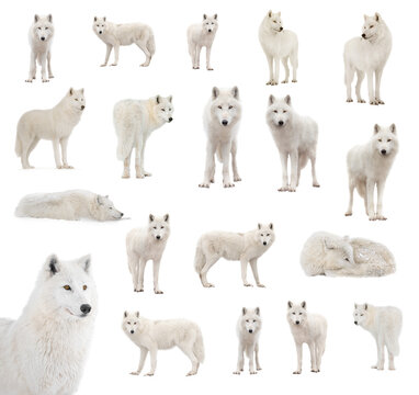 Collage of polar blocks isolated on white background.