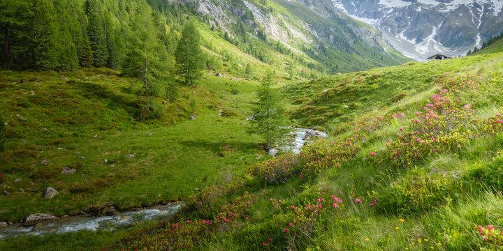 Panorama einer Berglandschaft mit Alpenrosen und Gebirgsbach in Österreich