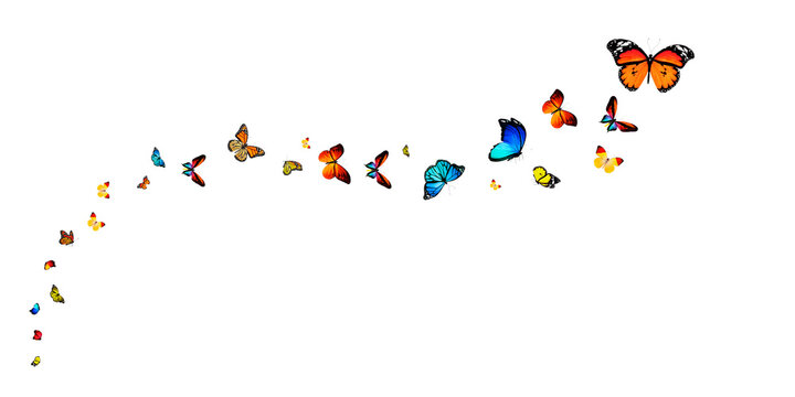 Butterflies Stock Image In White Background