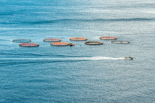 Aerial top view of the rings of fish aqua farm in the sea of madeira Portugal Europe